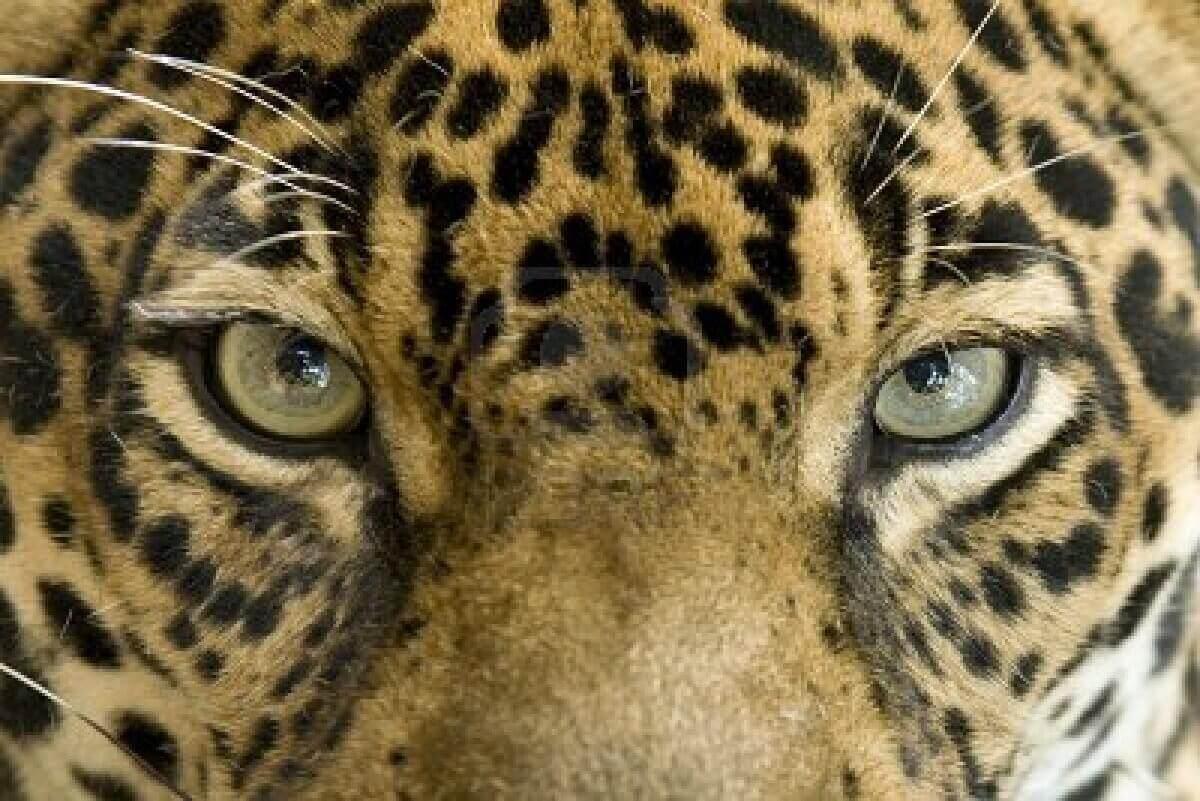 occhiGiaguaro