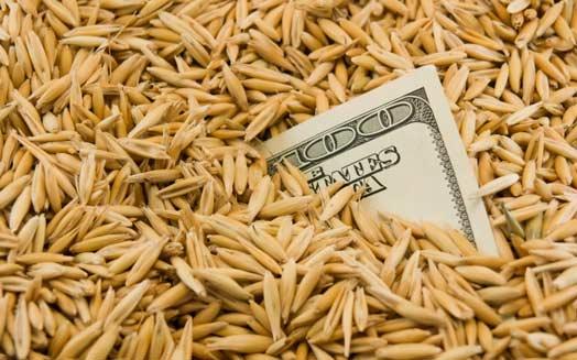 TERRA DELLE MIE BRAME: INVESTIRE IN AGRICOLTURA CONVIENE?