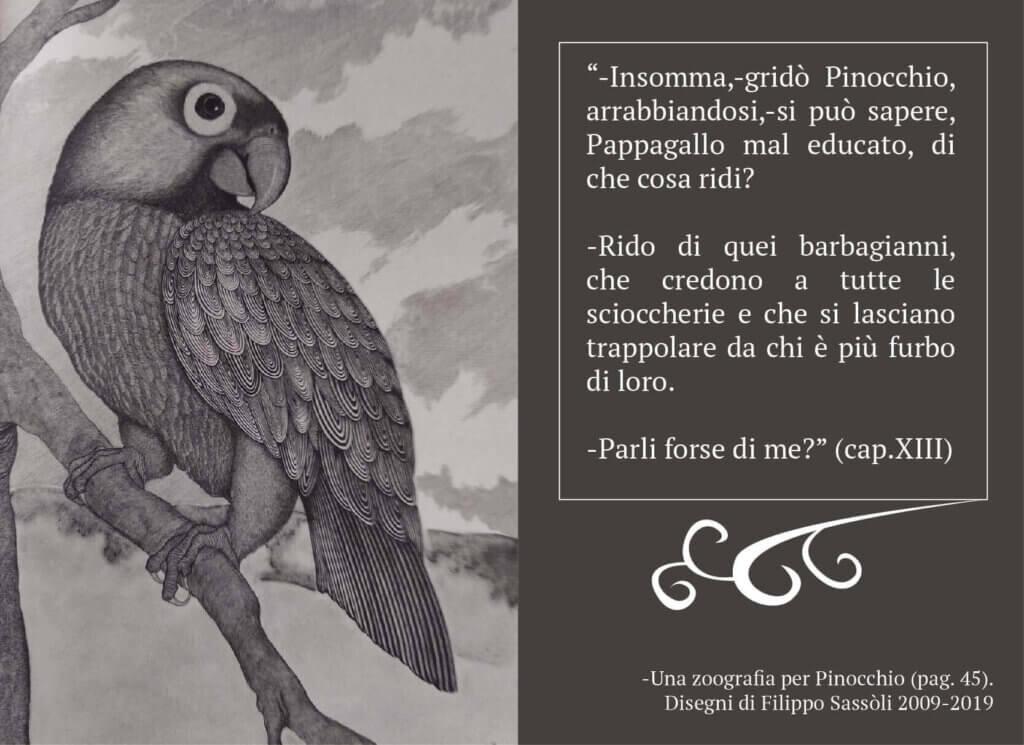 pappagallo_grafica_pinocchio